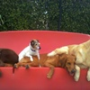 Up to 70% Off Doggy Daycare and Boarding