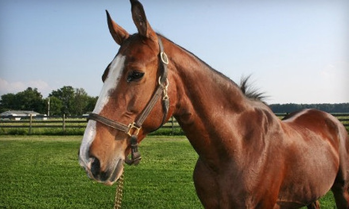 Trinity Farm - Camby: $40 for Two One-Hour Horse-Riding Lessons at Trinity Farm in Clayton ($80 Value)