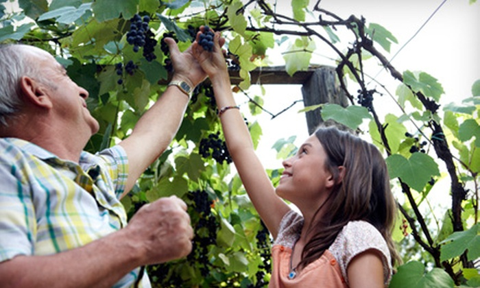 Dominion Wine Tours - Seven Corners: $60 for a Tour of Three Wineries and Lunch from Dominion Wine Tours ($120 Value)