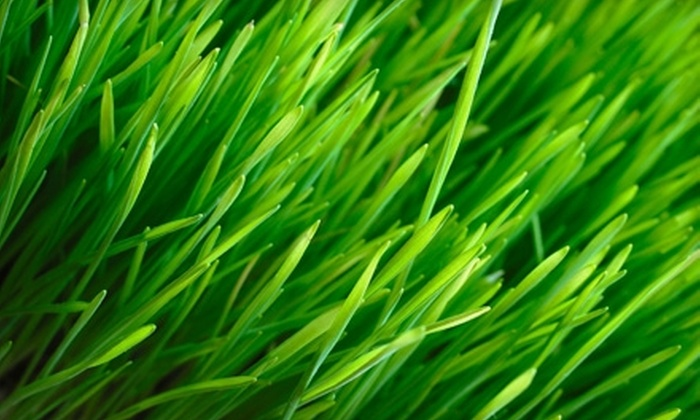 Mr. Landscaper - Nashville: $55 for Organic Lawn Care and Weed-Control Treatment from Mr. Landscaper ($125 Value)