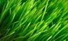 Mr. Landscaper: $55 for Organic Lawn Care and Weed-Control Treatment from Mr. Landscaper ($125 Value)