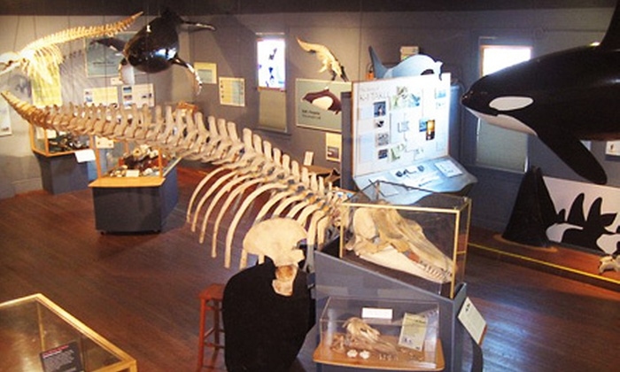 The Whale Museum - Friday Harbor: The Whale Museum Membership or Orca Eco-Adoption in Friday Harbor (Up to 52% Off). Five Options Available.