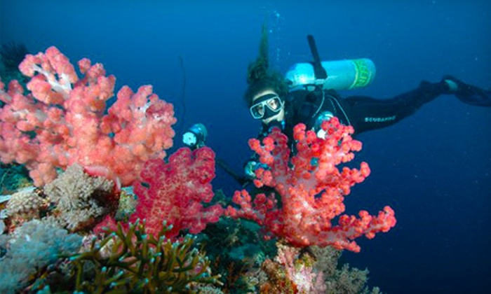 Tortuga Bay - Greeley: $40 Toward Scuba-Diving Classes or Products
