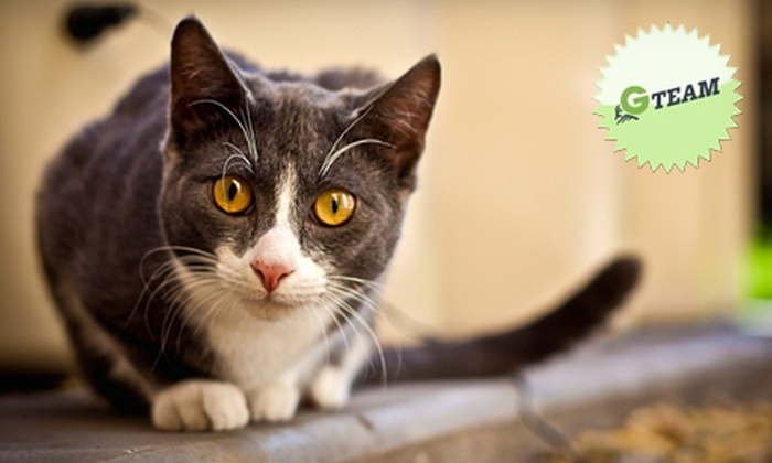 Spay N Save - Orlando: If 32 People Donate $10, Then Spay N Save Can Spay or Neuter Eight Cats at No Cost to Pet Owners or Caretakers