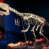 Up to 52% Off Dinosaur Museum Visits in Media