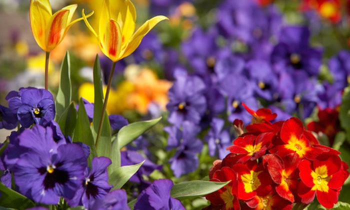 Cannor Nursery - Victoria: $20 for $40 Worth of Plants and Gardening Supplies at Cannor Nursery