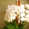 Up to Half Off Floral Arrangements with Delivery