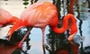 Flamingo Gardens - Flamingo Groves: One Adult or Children's Admission to Flamingo Gardens in Davie (Up to $18 Value)