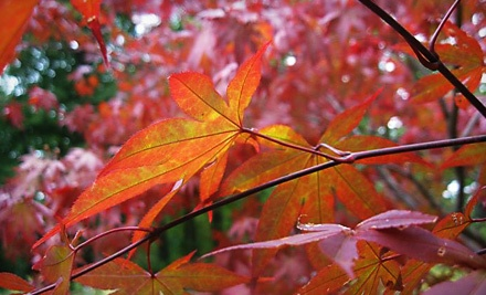 2 Admission Tickets (up to a $12 value) - The Holden Arboretum in Kirtland