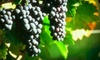 Oregon Wine Tours: $175 for a Willamette Valley Winery Tour for Two from Oregon Wine Tours in Dundee ($350 Value)