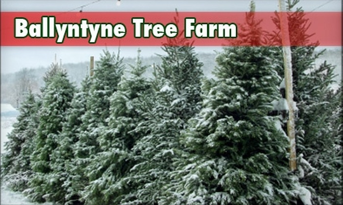 Ballyntyne Tree Farm - Salem OR: $10 for $20 Towards a Christmas Tree at Ballyntyne Tree Farm