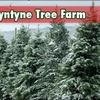 Ballyntyne Tree Farm - Salem: $10 for $20 Towards a Christmas Tree at Ballyntyne Tree Farm