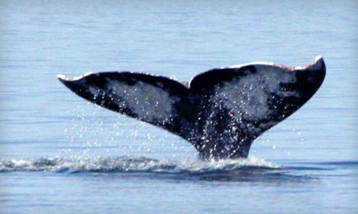 Island Adventures - Northwest Everett: $35 for Gray Whale Watching Tour from Island Adventures (Up to $69.25 Value)