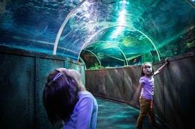 Découvrir le Grand Aquarium de Touraine