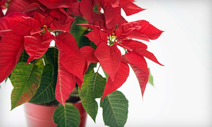 Virginia Beach Florist - Northeast Virginia Beach: $30 for $60 Worth of Holiday Flowers, Wreaths, and Gifts at Virginia Beach Florist