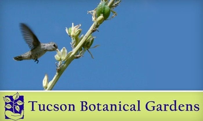 Tucson Botanical Gardens - Midtown: $30 for a One-Year Yucca Family Membership at Tucson Botanical Gardens ($60 Value)