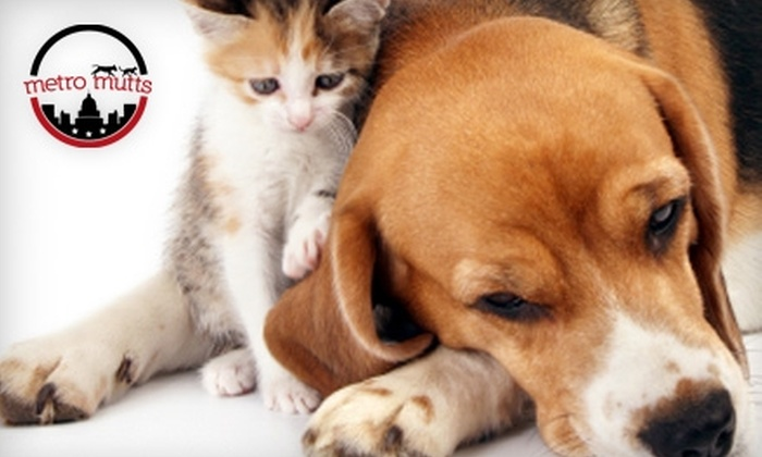 Metro Mutts - H Street - NoMa: $10 for $20 Worth of Pet Products at Metro Mutts