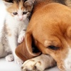 $10 for Pet Products at Metro Mutts