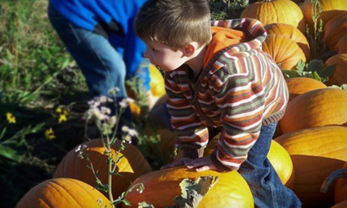 McMaze - St. Andrew's: Corn Maze and Haunted Walk for Two at McMaze in St. Andrews. Three Options Available.