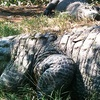 $10 for Alligator Farm Tour Tickets in Hammond
