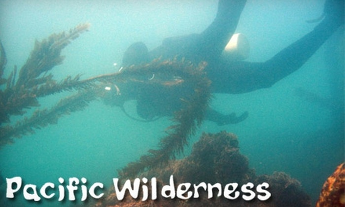 Pacific Wilderness - Central San Pedro: $25 for a Discover Scuba Diving Class at Pacific Wilderness in San Pedro ($50 Value)