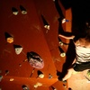 Up to 65% Off Rock Climbing in Fayetteville
