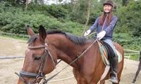 【最大78%OFF】気軽に楽しめる乗馬体験≪1回・乗馬体験レッスン20分(レンタル料・保険料込)/他2メニュー≫ @MRC乗馬クラブ広島
