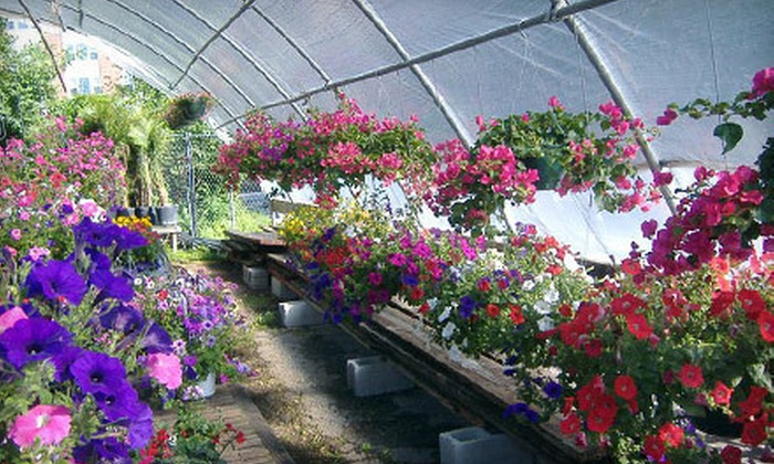 Judys Garden Shop - Ashland Park: Plants, Produce, and Farmers' Market Goods at Judys Garden Shop (Half Off). Two Options Available.