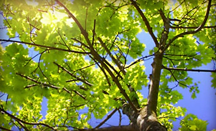 $225 Groupon for Tree Services - Brents Tree Service in