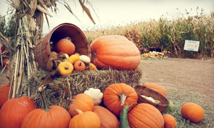 Diana's Pumpkin Patch & Corn Maze - Lincoln Park: $8 for Admission and Pumpkins for Two at Diana's Pumpkin Patch & Corn Maze ($16 Value)
