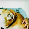 Up to 56% Off Pet Daycare or Boarding