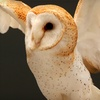 Up to 57% Off at Cascades Raptor Center