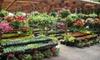 Loen Nursery Garden Center - Sherwood - Tualatin North: $19 for $40 Worth of Plants and Greenery, or Five-Gallon Japanese Maple Tree from Loen Nursery Garden Center