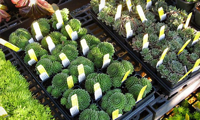 Randy's Perennials & Water Gardens - Lawrenceville: $15 for $30 Worth of Plants, Gardening, and Pond Supplies at Randy's Perennials & Water Gardens in Lawrenceville