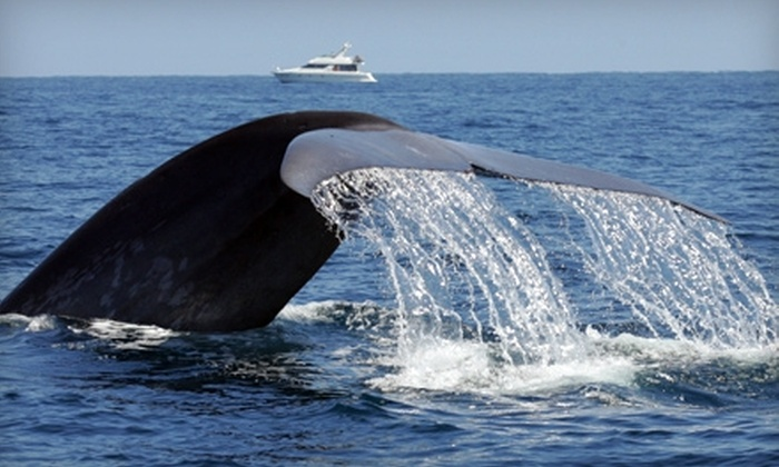 Dana Wharf Sportfishing & Whale Watching - Dana Point: $22 for One Ticket to a Sunset Whale Watching Cruise with Two Drink Tickets from Dana Wharf Sportfishing & Whale Watching in Dana Point (Up to $46 Value)