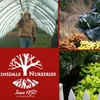 Hinsdale Nurseries - Willowbrook: $20 for $40 Worth of Garden Greens and Supplies at Hinsdale Nurseries
