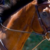 Up to 50% Off Horseback Riding Lessons at NFF Stables