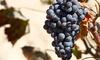 Bodegas San Isidro - Bodegas San Isidro: Visita guiada con degustación de vinos, aceite, tapa y botella de vino para 2, 4 y 6 desde 11,99 € en Bodegas San Isidro