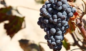 Bodegas San Isidro: Visita guiada con degustación de vinos, aceite, tapa y botella de vino para 2, 4 y 6 desde 11,99 € en Bodegas San Isidro
