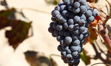 Visita guiada con degustación de vinos, aceite, tapa y botella de vino para 2, 4 y 6 desde 11,99 € en Bodegas San Isidro