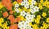 3er-Set Fingersträucher mit Blüten in Weiß, Gelb und Rot