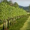 54% Off Wine-Tasting Package from Vintage Piedmont