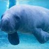 $8 for Admission to Mote Aquarium in Sarasota