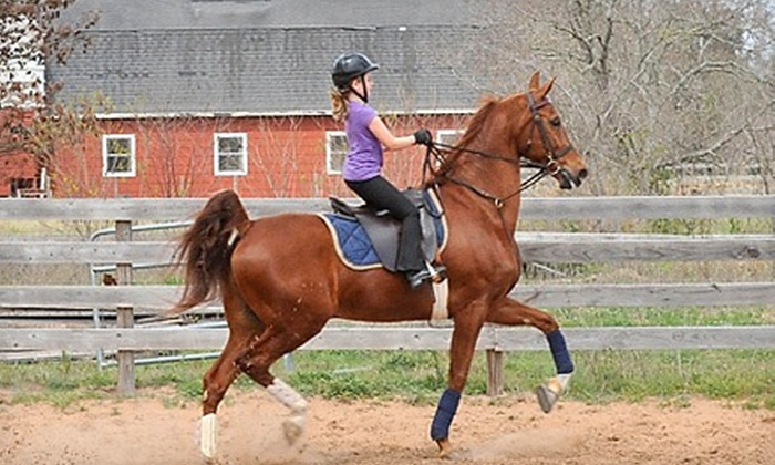 Vantage Point Farm - Northwest Harris: One or Two Private 30-Minute Horseback-Riding Lessons at Vantage Point Farm in Katy (Up to 51% Off)