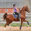 Up to 51% Off Horseback-Riding Lessons in Katy