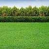 53% Off Lawn Fertilizer and Grub Killer