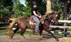 Choyce Party Ponies Clown and Bounce - Palm City: Guided Trail Ride or Horseback-Riding Lesson at Choyce Party Ponies Clown & Bounce in Palm City