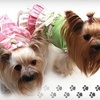 Fetch - West Lake Hills: $10 for $20 Worth of Pet Accessories, Treats, and More at Fetch