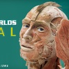 """Science Center of Iowa – Up to 51% Off """"Body Worlds Vital"""" Exhibit"""