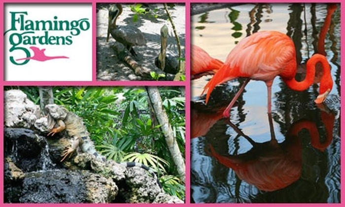 53 Off Flamingo Gardens Admission Flamingo Gardens Groupon